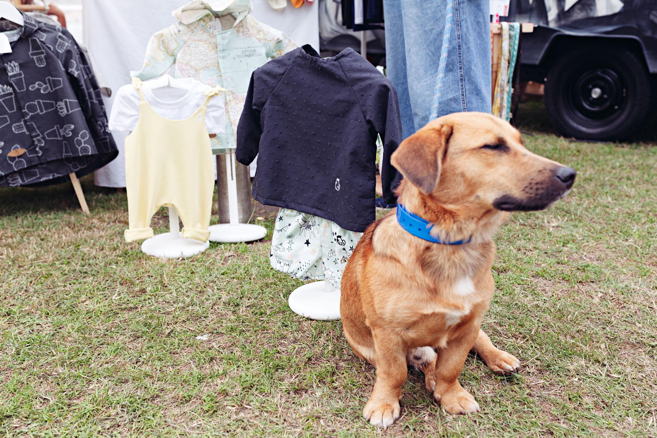 Eventos que admiten mascotas
