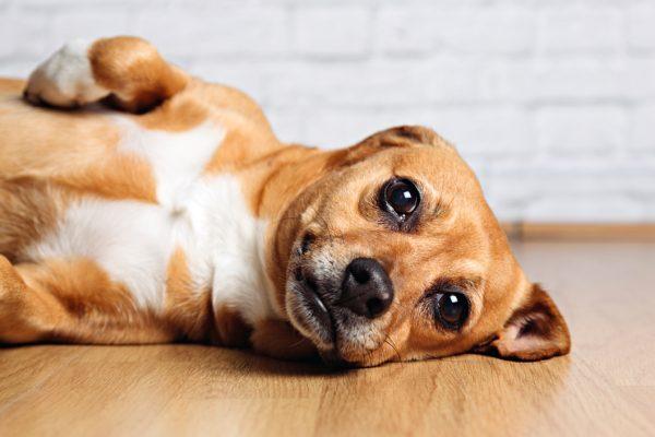 Fotos de mascotas en estudio