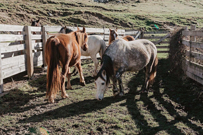 Cuadra Sobia rutas a caballo