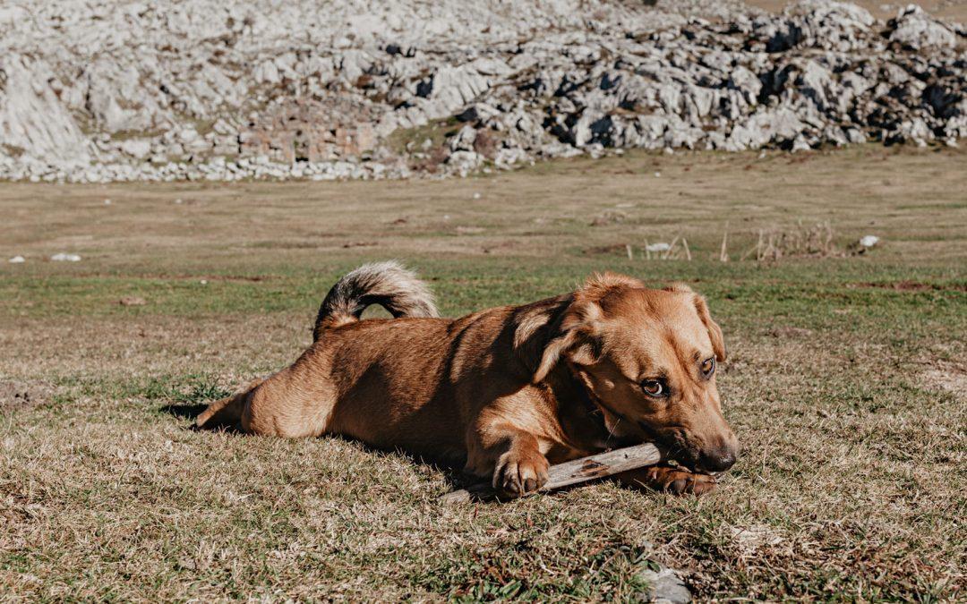 Un paseo por Peña Sobia: el Picu Siella