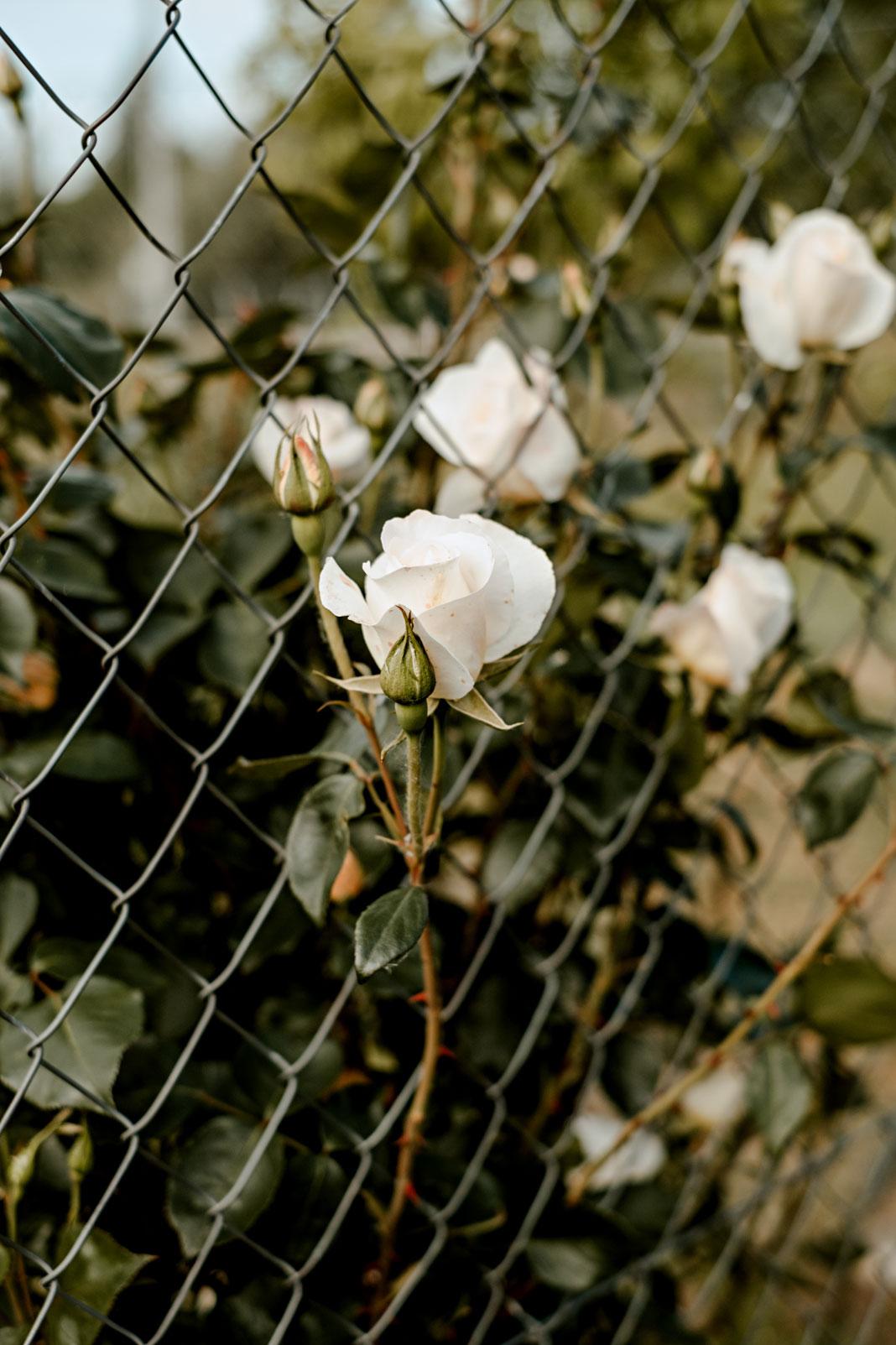 Fotografía de flores