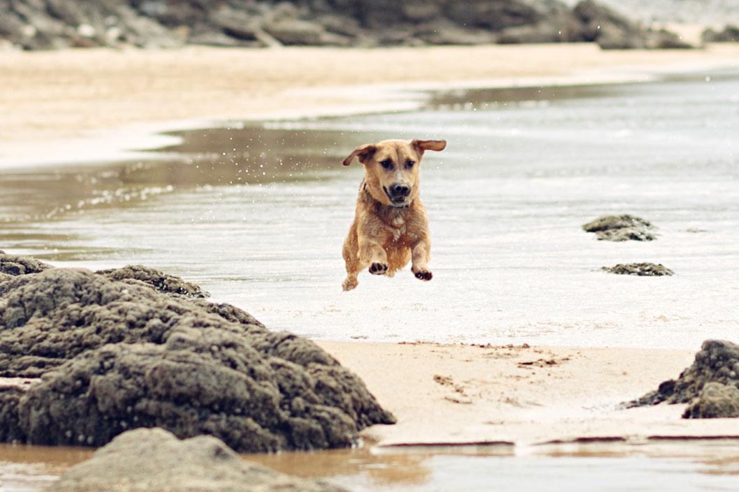 Más playas para perros
