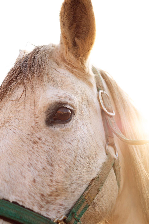 Fotografía de caballo