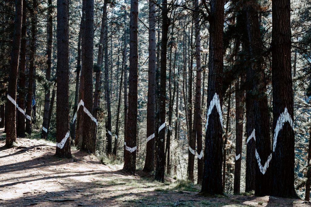 Ver el Bosque de Oma