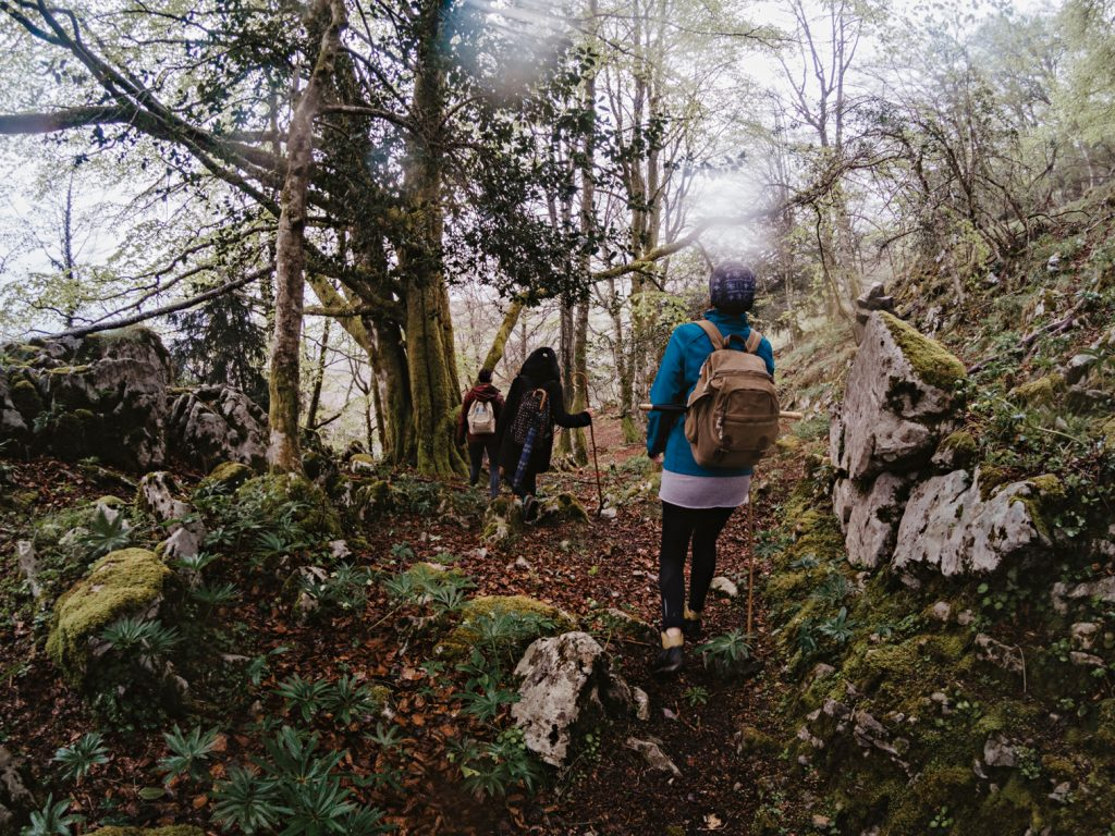 Bosques asturianos