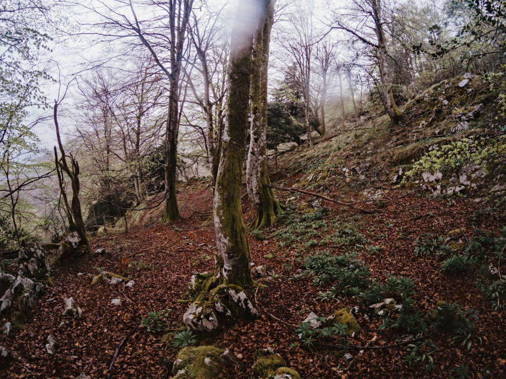 Fotografía del paisaje asturiano