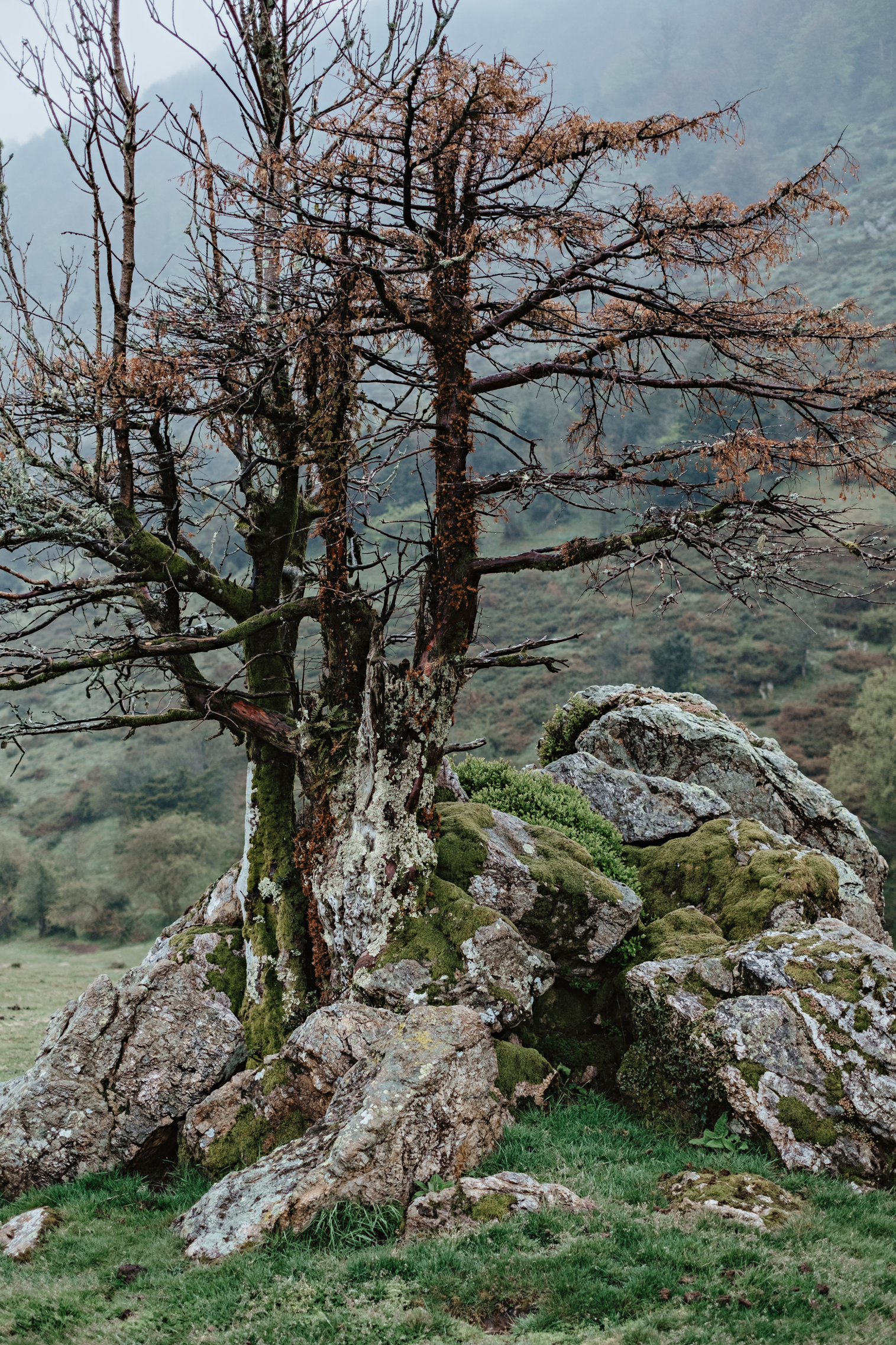 Tejo asturiano
