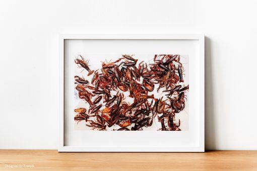 Lámina decorativa: cangrejos